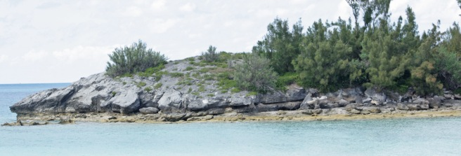 Whalebone Bay whole section