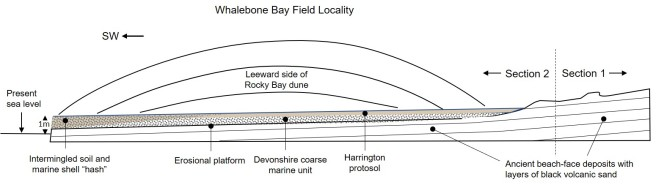 Locality cross section